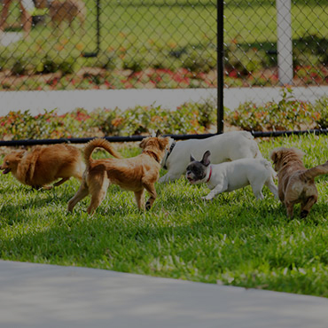 Large Dog Park at Panomar Apartments